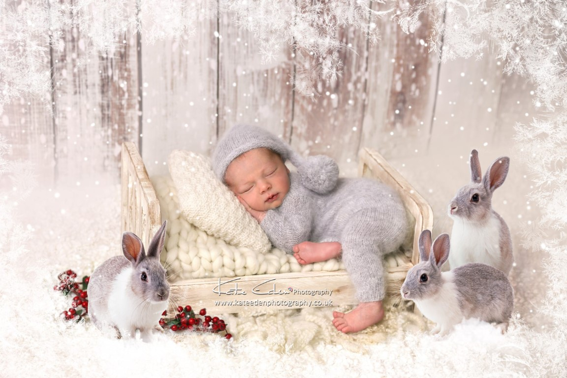 Composite Photography - Christmas - winter bunnies - newborn photography